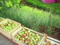 ogrodnik -  ogród użytkowy, warzywa, owoce i zioła