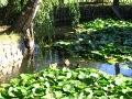 woda w ogrodzie, zwierzęta, kaczki, zdjęcia, galeria ogrodowa