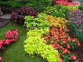 ogrodnik - kwiaty trudniejsze w uprawie