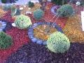 kompozycje z  iglaków, na tle śćiólki ozdobnej, dodatki ogrodowe, kwietniki,  ogrodnik-amator, kompozycje ogrodowe, rabata