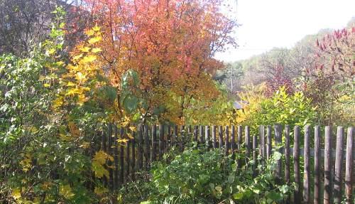ogród , rośliny do ogrodu listopad w ogrodzie kalendarz ogrodnika, ogrodnik-amator.pl, środek jesieni, rośliny do ogrodu, listopadowy ogrod,  w ogrodzie kalendarz ogrodnika, ogrodnik-amator.pl