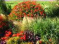 rośliny narabaty, letnia rabata, lato w ogrodzie, ogród latem,  rośliny do ogrodu, dodatki ogrodowe,  zdjęcia, galeria ogrodowa, zdjęcia ogrodów, ogród ozdobny