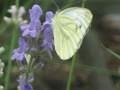 szkodniki roślin ogrodowych, ogród użytkowy