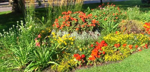 lato w ogrodzie, aranżacja oczka wodnego, ogroód japoński, rośliny do ogrodu, sierpień w ogrodzie kalendarz ogrodnika, ogrodnik-amator.pl