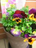 ogrodnik - wiosenne nawożenie roślin ogrodowych, nawożenie wiosną