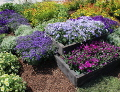 kolor niebieski w o grodzie, niebieska rabata, kwiaty, byliny trawy