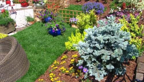 kolor niebieski w ogrodzie, niebieskie akcenty w ogrodzie, kwiaty kwitnące na niebiesko, niebieskie iglaki, niebieskie dodatki ogrodowe