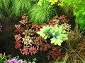 niedośpiany i trawy ozdobne,  kompozycje z traw i ozdobnych liści, kompozycje ogrodowe, zdjęcia ogrodów, galeria ogrodowa