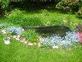 oczko wodne, niezapominajki nad wodą,  dodatki ogrodowe, urządzanie  ogrodu , zdjęcia ogrodów, dodatki  ogrodowe, galeria ogrodowa, ogród ozdobny