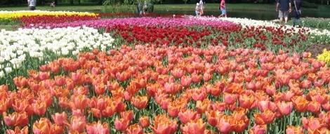 Ogród botaniczny Łódź, ogrody parki w Polsce, piękne ogrody Europy