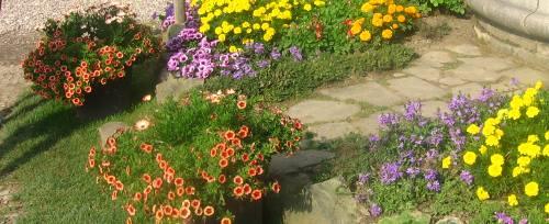 ogród , rośliny do ogrodu luty w ogrodzie kalendarz ogrodnika, ogrodnik-amator.pl