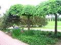 zdjęcia ogrodów, dodatki ogrodowe, małe drzewa, galeria ogrodowa, ozdobne korony drzew, pomysły na ogród