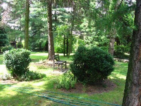 wycinka drzew, przepisy prawne, prawo i ogród, przepisy prawa, ogrodnik, prawo w  ogrodzie