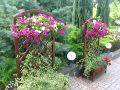 dodatki ogrodowe, urządzanie  ogrodu , zdjęcia ogrodów,  donice i kwiaty w ogrodzie, surfinie,petunie dodatki  ogrodowe, galeria ogrodowa, ogród ozdobny