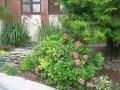 hortensja ogrodowa, iglaki i trawy, przedogródek