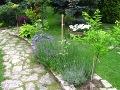 zdjęcia ogrodów, dodatki ogrodowe, rabaty bylinowe, kamienna ścieżka, galeria ogrodowa