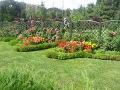 urządzanie  ogrodu, rabaty mieszane, krzewy i kwiaty,  rabaty przy płocie, pomysł na ogród ogrodu, aranżacje z roślin, galeria ogrodowa