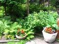 zdjęcia ogrodów, dodatki ogrodowe, rabaty mieszane, rabaty bylinowe, kwiaty ogrodowe w donicach, galeria ogrodowa