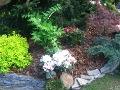 urządzanie  ogrodu , dodatki  ogrodowe, galeria ogrodowa,kokorycz, rododendrony, klon palmowy
