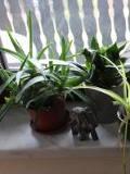 rośliny doniczkowe, pokojowe, rosliny do sypialni, rosliny na dobry sen