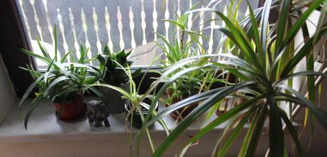 rośliny pokojowe do sypialni, rośliny oczyszczające powietrze, rośliny na sen,  ogrodnik,  ogród i dom