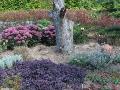 susza w ogrodzie, gleba sucha, ogród ozdobny, porady ogrodnicze