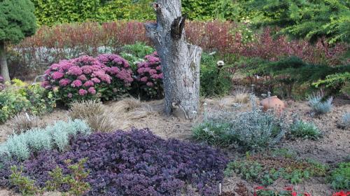 susza w ogrodzie, gleba sucha, rośliny wytrzymałe na suszę