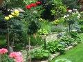 ogrodnik - krzewy trudniejsze w uprawoe, krzewy do ogrodu