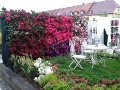 wystawa ogrody daisy w Pszczynie, ściana rododendronów, maj, rośliny ozdobne, aranżacje, ogród, urządzanie ogrodu, aranżacje z roślin, galeria ogrodowa