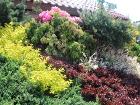 kolorowe krzewy na skarpie, iglaki, berberysy czerwone, żółte, kolorowe liście, rózowe rododendrony