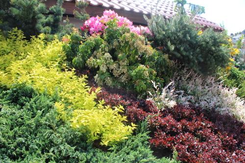 wiosna, lato różnokolorowe krzewy