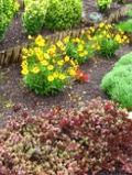ogrodnik -  rabaty bylinowe, rosliny wieloletnie, byliny, na rabaty