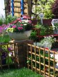 ogród ozdobny , rośliny egzotyczne, rośliny  na balkony i tarasy