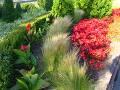 rośliny na rabaty, trawy ozdobne, kanna, paciorecznik, begonia stale kwitnąca, dodatki ogrodowe, kwietniki, zdjęcia, galeria ogrodowa