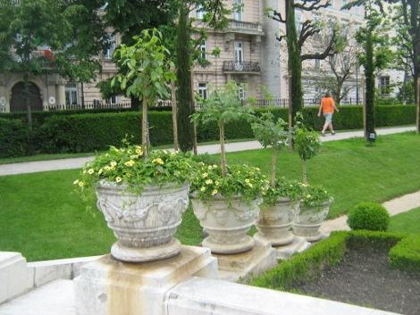 urządzanie  ogrodu , dodatki  ogrodowe, galeria ogrodowa, zieleń miejska, tunbergie