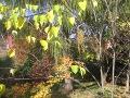 rośliny ozdobne drzewa i krzewy ozdobne, aranżacje, ogród, urządzanie ogrodu, aranżacje z roślin, galeria ogrodowa