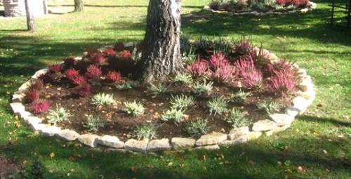 ogród , rośliny do ogrodu, style ogrodowe, ogród wrzosowisko w ogrodzie, ogrodnik-amator.pl