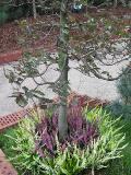 wrzosowisko, rośliny krzewiaste łatwe w uprawie, wrzos, wrzosy, krzewy ogrodowe, krzewy ozdobne