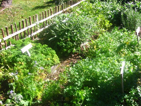 ziołowy ogródek, zioła w ogrodzie, zioła  ogrodowe, zioła do ogrodu