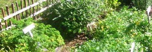 rosliny ziołowe, zioła w ogrodzie, zioła w domu, uprawia ziół