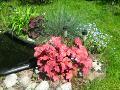 rośliny nad wodę, oczko wodne, wiosna w ogrodzie, ogród latem,  rośliny do ogrodu, dodatki ogrodowe,  zdjęcia, galeria ogrodowa, zdjęcia ogrodów, ogród ozdobny