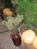 jesienne aranżacje, dekoracje z jesiennych kwiatów, warzyw i owoców, ogrodnik, ogród, jesień w ogrodzie, owoce dyni olbrzymiej,  galeria ogrodowa