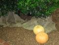 październik w ogrodzie, październikowe kwiaty, zabiegi przeprowadzane w październiku, rozmnażanie roślin w październiku, dzielenie bylin, sadzonkowanie krzewów, rośliny pielęgnacja w miesiącu październiku, październikowy ogród, prace w ogrodzie jesień w ogrodzie