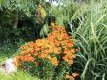 letni ogród, dzielżany, trawy i drzewa,  galeria ogrodowa