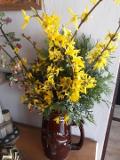 Ogrodnik-amator, opis rośliny, Forsycja, Forsythia, Forsythia, uprawa forsycji,  krzewy kwitnące wiosną, krzewy o żółtych kwiatach, krzewy na gleby żyzne, Krzewy łatwe w uprawie, krzewy lisciaste,  krzewy ozdobne
