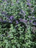 ogród użytkowy, zabiegi pielęgnacyjne, cięcie buylin latem