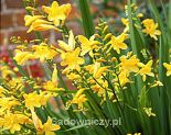 ogrodnik-amator.pl oferta sadowniczy