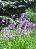 ogród, wysiewy nasion, jesienne wysiewy kwiatów