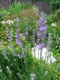 Ogrody, zdjęcia lawendy, lawenda w ogrodzie