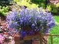 ogród, wysiewy nasion, pierwsze wysiewy w sezonie